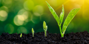 seeds to plant in your business